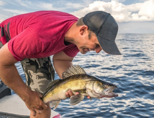 Honey Harbour: Summer Walleye Fishing in Ontario